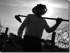 aposentadoria-do-trabalhador-rural